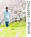 女性 桜 春の写真 28897442