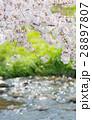 桜 春 川の写真 28897807