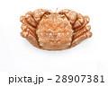 毛ガニ 28907381