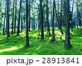 森林 林 森の写真 28913841