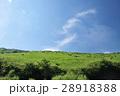 樹々の緑と青空のコントラスト 28918388