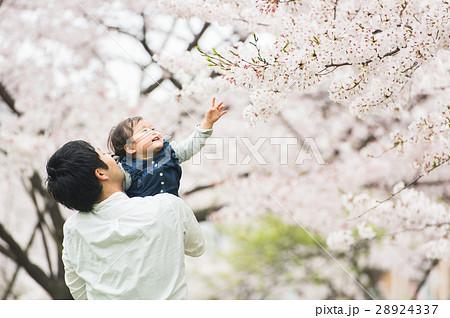桜の下で遊ぶ親子 28924337