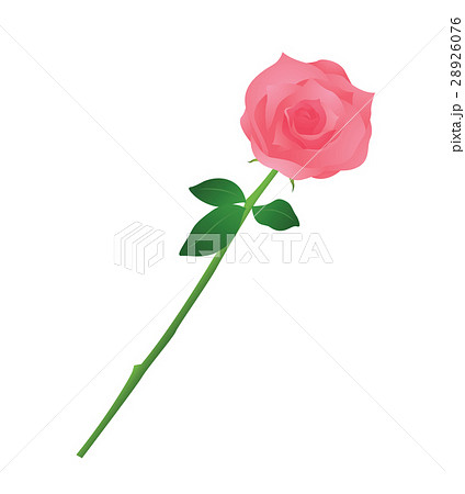 薔薇 28926076