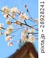 北野天満宮 28928241