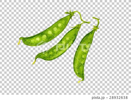 野菜イラスト キヌサヤエンドウ 28932638