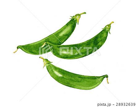 野菜イラスト スナップエンドウ 28932639