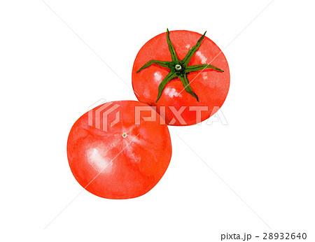 野菜イラスト とまと 28932640