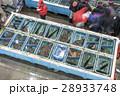 魚市場 競り 28933748