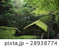 苔 屋根 寺の写真 28938774