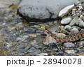 ヤマカガシ_DSC7133 28940078
