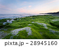 Rocky shore covered with green algae in the early 28945160