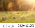 野原 運動場 畑の写真 28948123