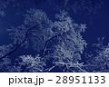 ウィンター ウインター 冬の写真 28951133