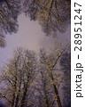 ウィンター ウインター 冬の写真 28951247