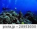 ダイバー 水中 水の写真 28953030