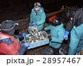 漁師 働く 男性の写真 28957467