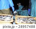 漁師 働く 男性の写真 28957488