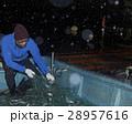 水揚げ 漁師 漁業の写真 28957616