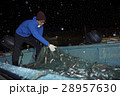 漁師 仕事 男性の写真 28957630