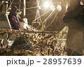 水揚げ 漁師 漁業の写真 28957639