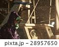 水揚げ 漁師 漁業の写真 28957650