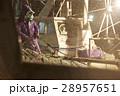 漁師 漁業 日本の写真 28957651