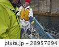 漁師 仕事 男性の写真 28957694