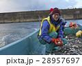 漁師 漁業 漁の写真 28957697