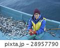 漁師 漁業 漁の写真 28957790