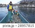 漁師 漁業 人物の写真 28957815