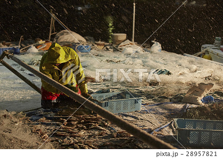 日本の漁業 イメージ 28957821