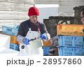 水産業 漁業 男性の写真 28957860