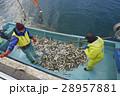 働く漁師たち 28957881
