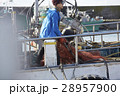 漁師 男性 1人の写真 28957900