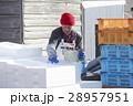 水産業 漁業 男性の写真 28957951