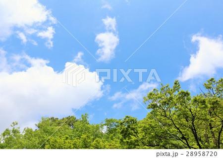 初夏の青空と新緑の風景 28958720