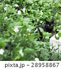 野貓 28958867