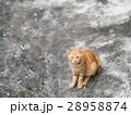 野貓 28958874