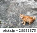 野貓 28958875