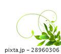エコ エコロジー 新緑のイラスト 28960306