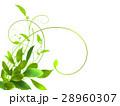 エコ エコロジー 新緑のイラスト 28960307