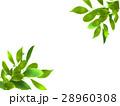 エコ エコロジー 新緑のイラスト 28960308