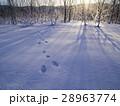 雪原 夜明け 足跡の写真 28963774