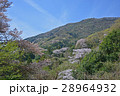 桜_雪入山 28964932
