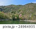 桜 春 花の写真 28964935