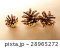 Dry cones closeup 28965272