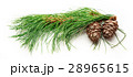 Two pine cones with fir branch 28965615