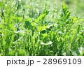 草原 野原 草の写真 28969109