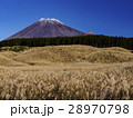 すすき原と富士山(山梨県) 28970798