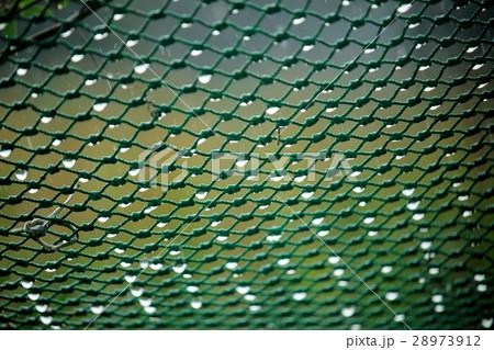 雨の日のネット 28973912